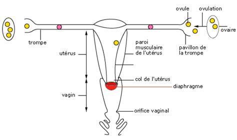 cours de svt la contraception maxicours