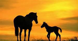 Bilder Von Pferden : silhouette von zwei pferden hd hintergrundbilder ~ Frokenaadalensverden.com Haus und Dekorationen