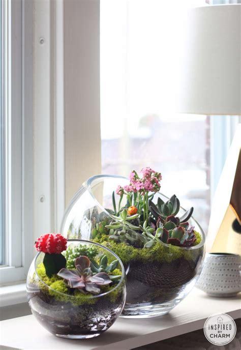indoor succulent diy project ideas page