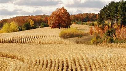 Harvest Backgrounds Wallpaperaccess Px Wallpapers