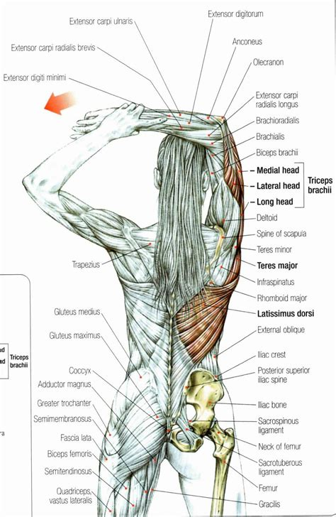 Stan prokopenko • june 2, 2016 • 2 comments. Middle back pain, rotator cuff pain, neck pain, golfer's ...