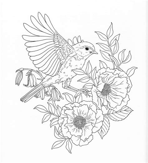 harmony  nature adult coloring book pg  coloring
