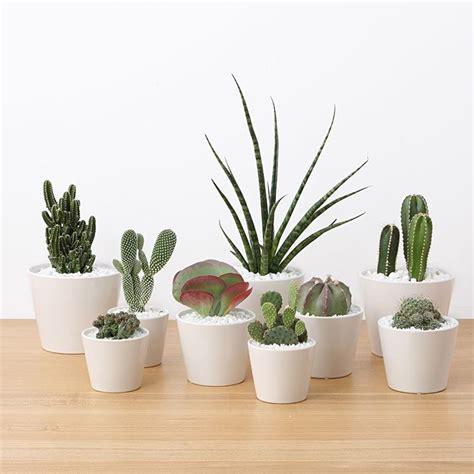 piante ufficio piante da scrivania ufficio notteazzurrajesi