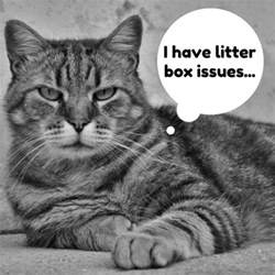 cat not using litter box cat not using litter box try these solutions pethelpful