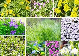 Pflanzen Für Steingarten : pflanzen f r den steingarten ideen zum bepflanzen ~ Michelbontemps.com Haus und Dekorationen