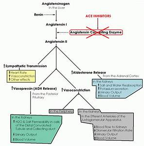 Classification Of Angiotensin Converting Enzyme Inhibitors