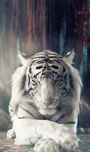 1440x2560 White Tiger Dreamy Samsung Galaxy S6,S7 ,Google ...