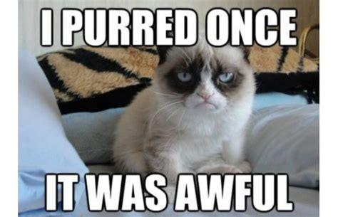 Grumpy Cat Funniest Memes - 50 most funny grumpy cat meme of all time