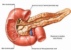 Birmingham Medical News Blog  Shining A Light On The Pancreas