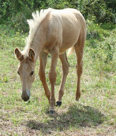 missouri mule mules company