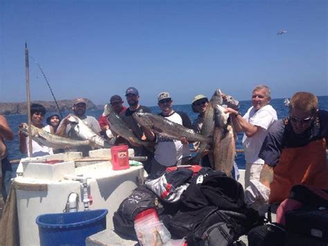 Don T Rock The Boat Fish by Channel Islands Sportfishing Center Seabass Calicos And