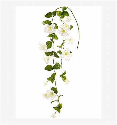 Hanging Flowers Transparent Petunia Spray Seekpng