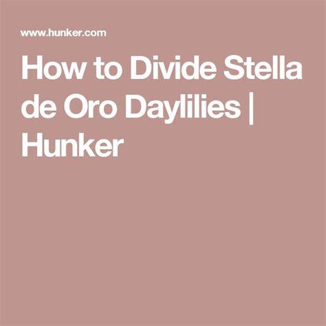 how to divide daylilies best 25 de oro ideas on pinterest gray en espa 241 ol pulseras oro and pulseras de oro