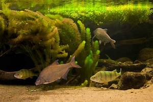 Süßwasserfische Fürs Aquarium : aquarienlandschaften m ritzeum aquarium aquarien ~ Lizthompson.info Haus und Dekorationen