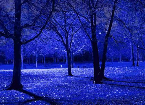 Blue Tree Wallpaper by Blue Trees Branches Lidya S
