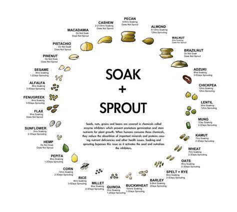 Sprouted Pumpkin Seeds Vs Unsprouted by Soaking Nuts And Seeds Relished Food Holistic Nutrition