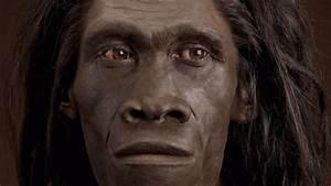 ¿Fue el 'Homo erectus' la primera especie capaz de navegar ...