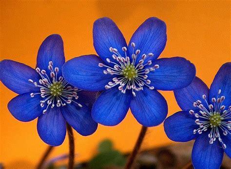 1000+ Images About Orange & Blue Flowers On Pinterest