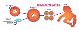 Modes Of Reproduction : Different Modes Of Reproduction In ...