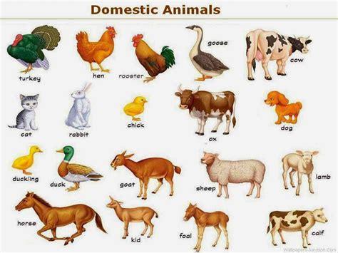 essay   domestic animal animals   english