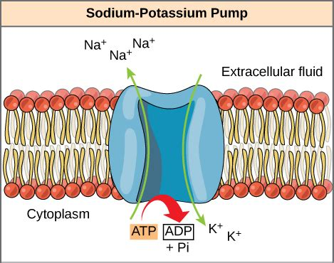 atp adenosine triphosphate 183 biology