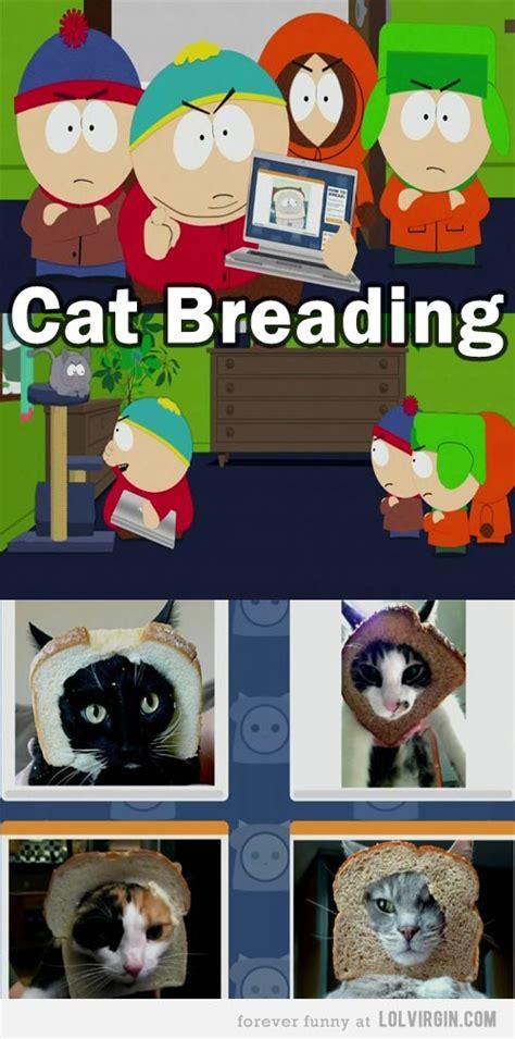 South Park Meme Episode - cat breading memes from south park season 16 episode 3 lolvirgin house of humor