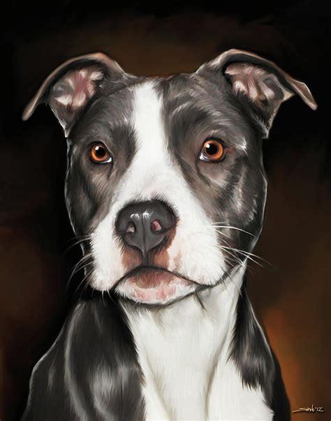 cute dogs black  white pitbull terrier
