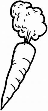 Carrot Coloring Pages Hair Afro Carrots Template Place Sketch sketch template