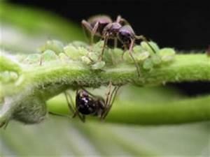 Ameisen Bekämpfen Wohnung : fliegende ameisen bek mpfen ~ Michelbontemps.com Haus und Dekorationen