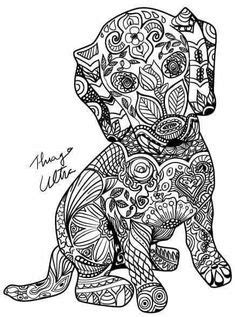 16 Best Dachshund Coloring Pages images   Weenie dogs