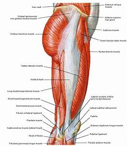 Best 25  Soleus Muscle Ideas On Pinterest