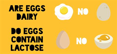 are eggs considered dairy are eggs dairy free and do they contain lactose i hate you milk