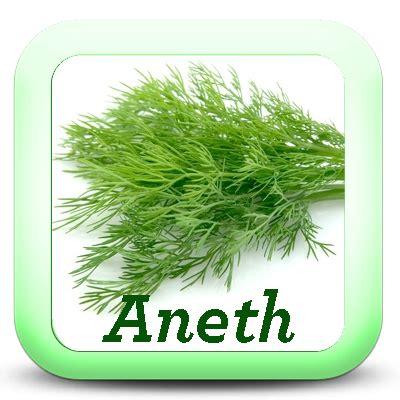 cuisine fenouil les herbes aromatiques dans la cuisine je cuisine mon