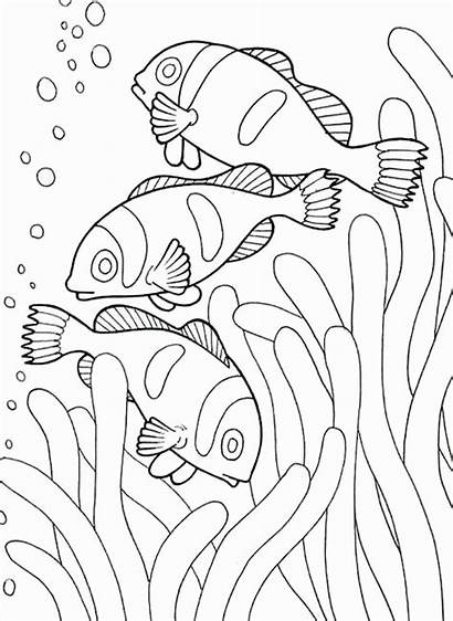 Coloring Pages Underwater Sea Animals Creatures Animal