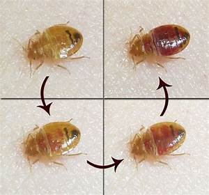 caes newswire bed bugs from school With bed bugs in schools