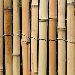Grüner Sichtschutz Garten : sichtschutz bambus z une bambusz une bambus garten japanwelt ~ Markanthonyermac.com Haus und Dekorationen
