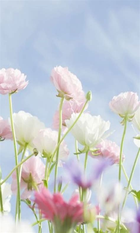 See the best cute phone wallpapers collection. Download 480x800 «Delicate flowers» Cell Phone Wallpaper ...