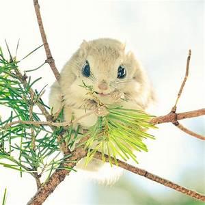 Hokkaido Island In Japan Is Home To 7 Incredibly Cute ...
