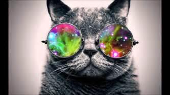 cool cats cool cat hd wallpaper wallpapersafari
