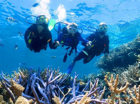 dive in diving on the great barrier reef scuba dive cairns and