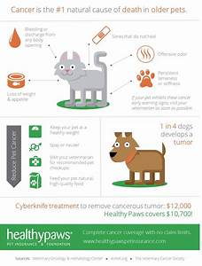 what you need to know about cancer and pet insurance