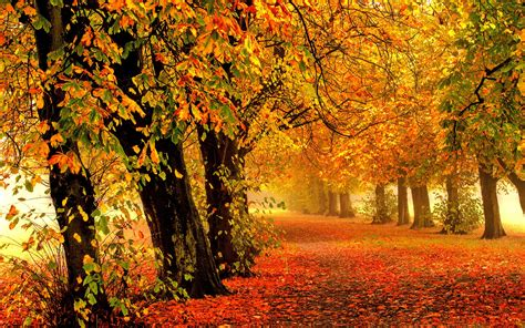 wallpaper autumn park forest leaves  nature