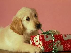 Cute Christmas Animals - Wuvely