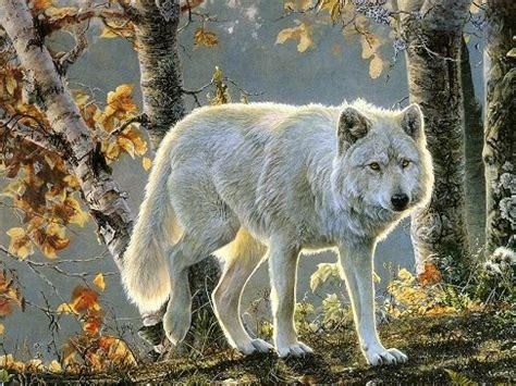 wild animals wallpapers   wildlife animals