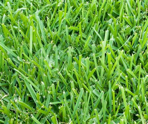 Six Types Of Grass For Florida Lawns