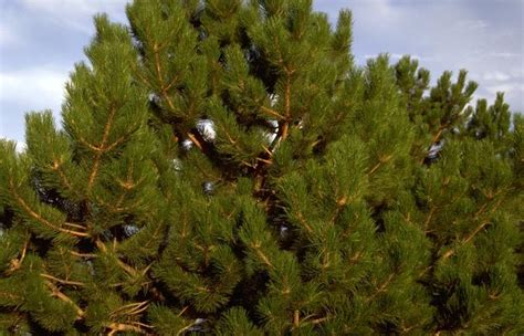 best places to cut down your own christmas tree in