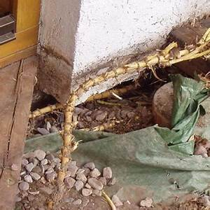 Rhizomsperre Selber Bauen : rhizomsperre bambus und granit f r haus und garten ~ A.2002-acura-tl-radio.info Haus und Dekorationen