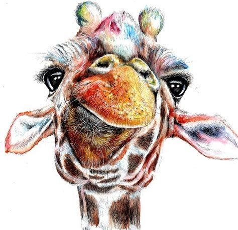 giraffe color pencil drawing  abigal leigh full image