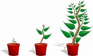 Grow Belüftung Berechnen : led wachstumslampen f r pflanzen ~ Themetempest.com Abrechnung