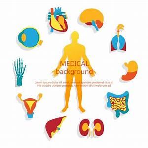 U1408 Human Organs Diagram Stock Illustrations  Royalty Free